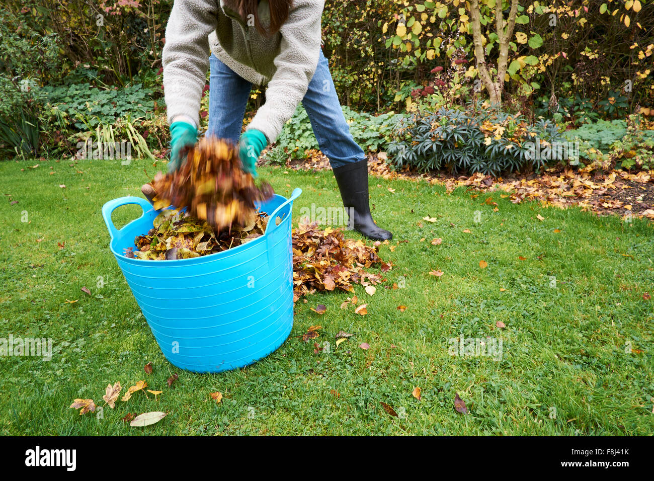 Female gathering autumn leaves to make leave mould compost. Stock Photo