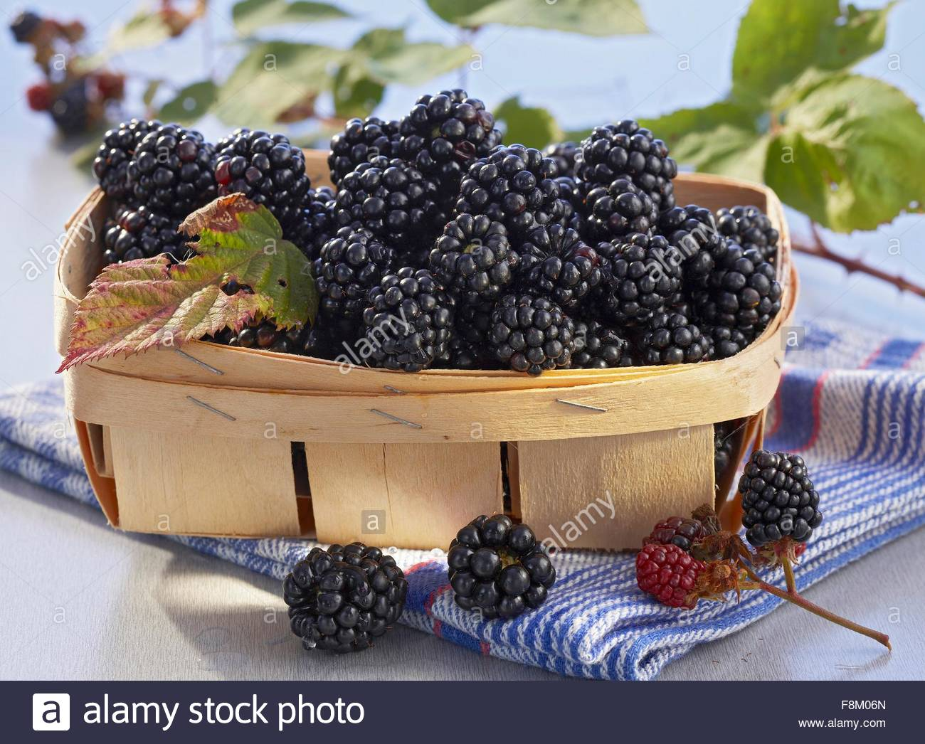 Blackberries in a woven chip basket - Stock Image