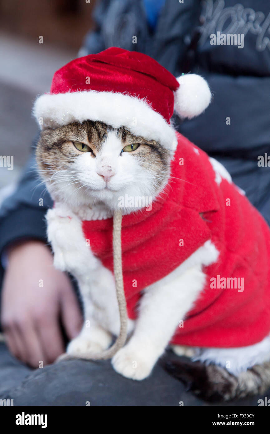 a-cat-dressed-in-christmas-costume-with-santa-hat-europe-F939CY.jpg