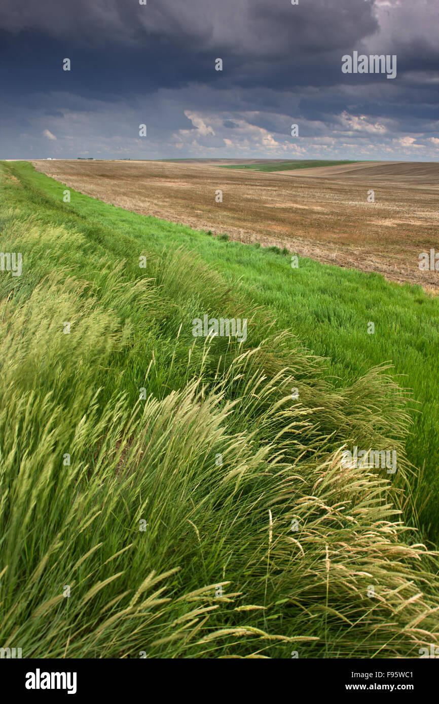 cropland near Lancer, Saskatchewan, Canada - Stock Image