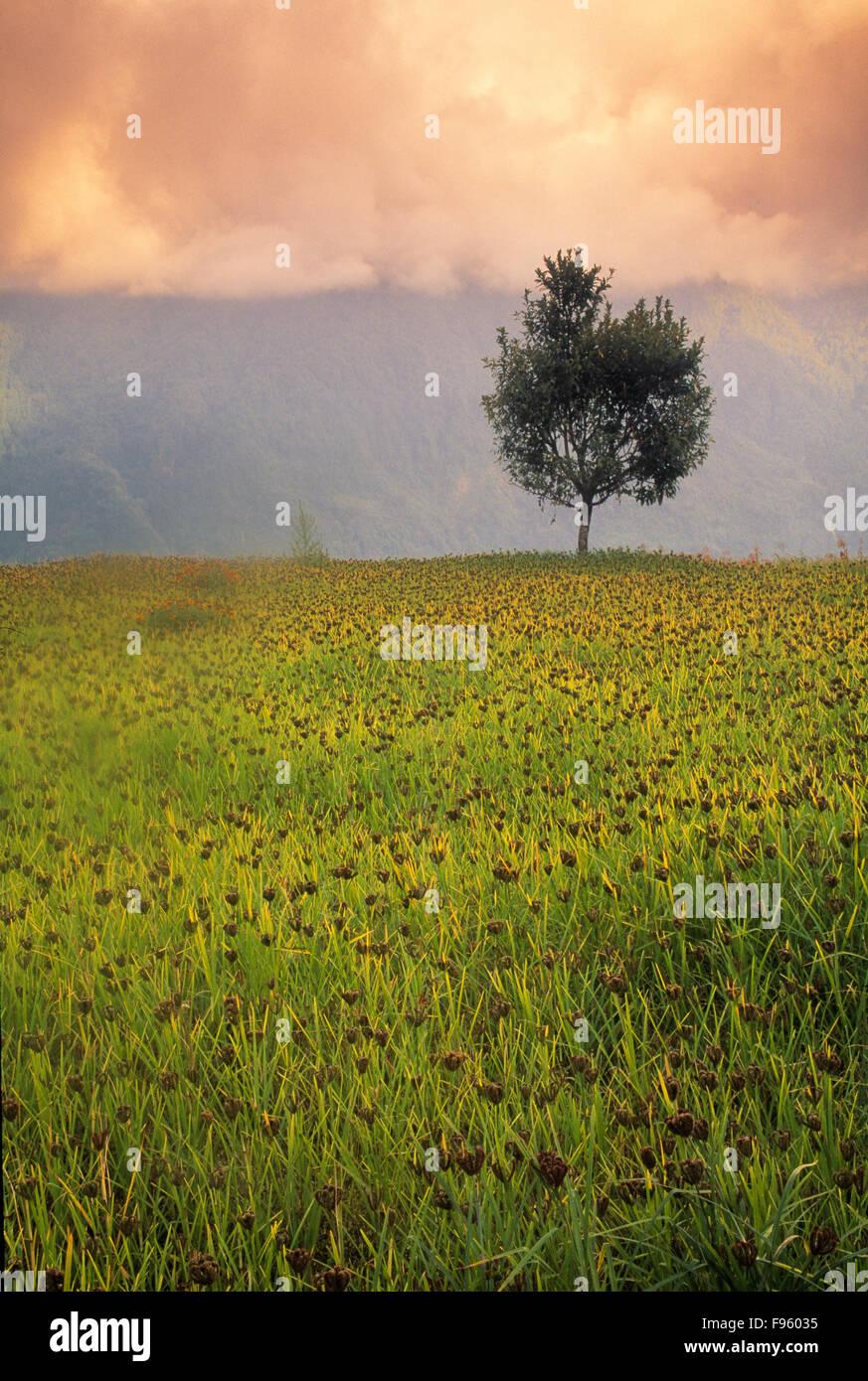 Cropland on the Annapurna Circuit, Nepal - Stock Image