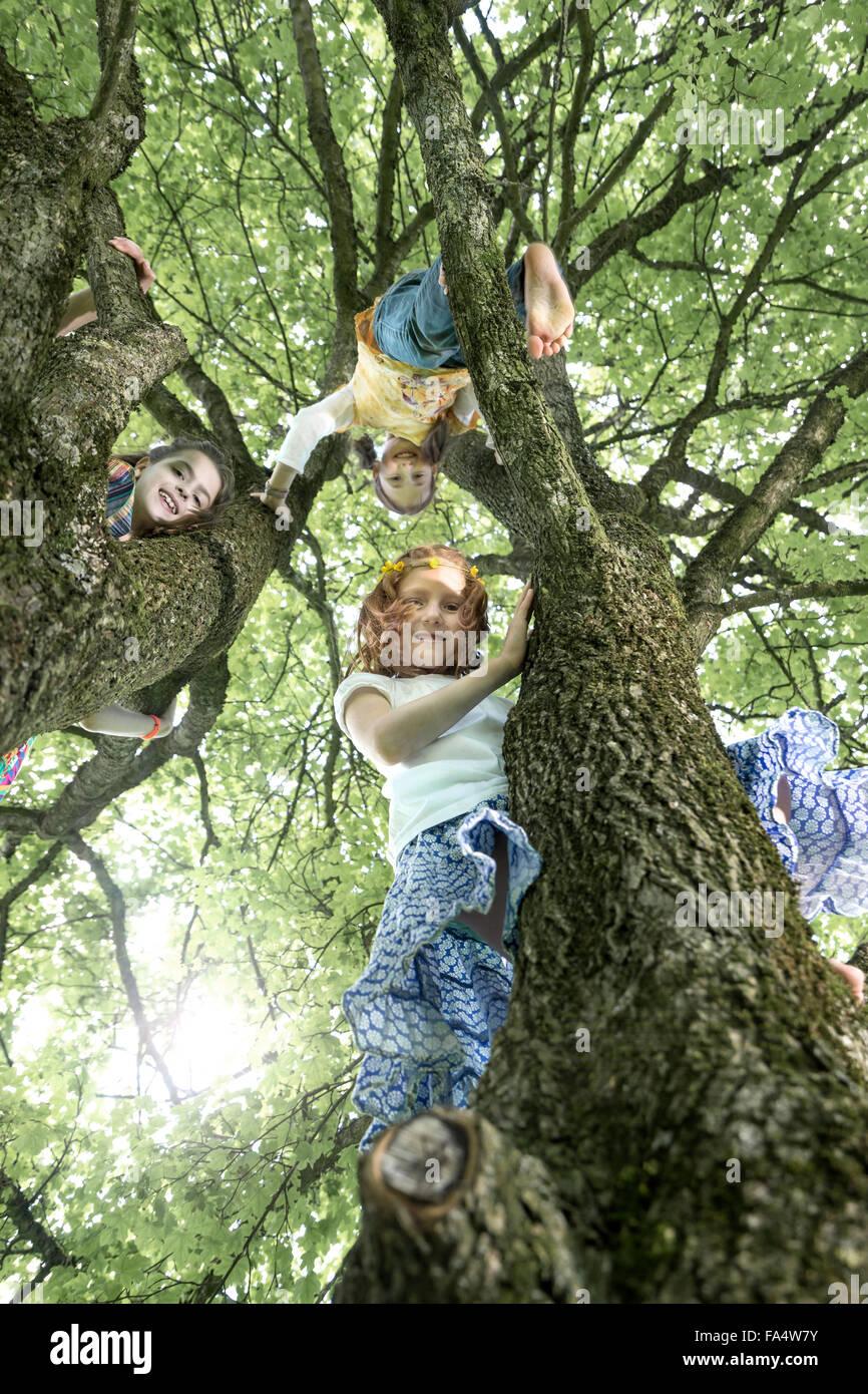 Girls climbing on tree, Munich, Bavaria, Germany - Stock Image