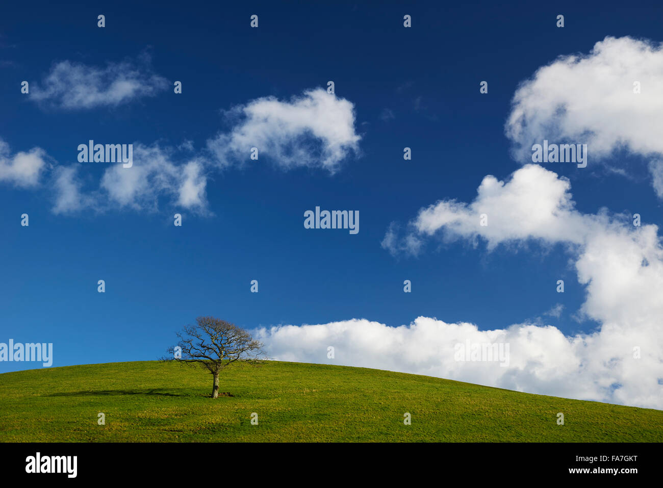 A single tree on a hillside - Stock Image