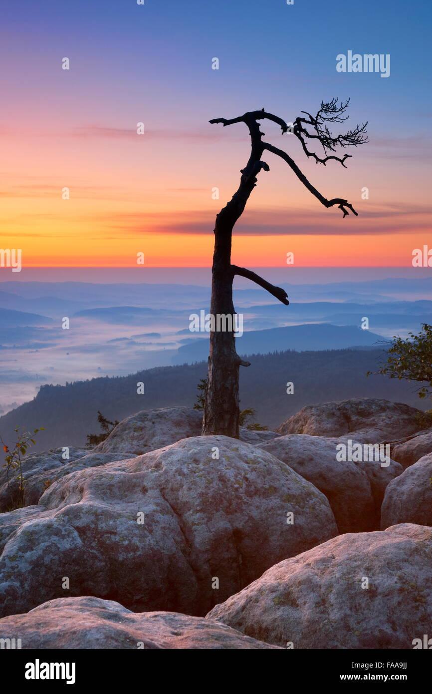 Single alone tree landscape at Szczeliniec Wielki Sudety Mountains at sunrise, National Park, Poland - Stock Image