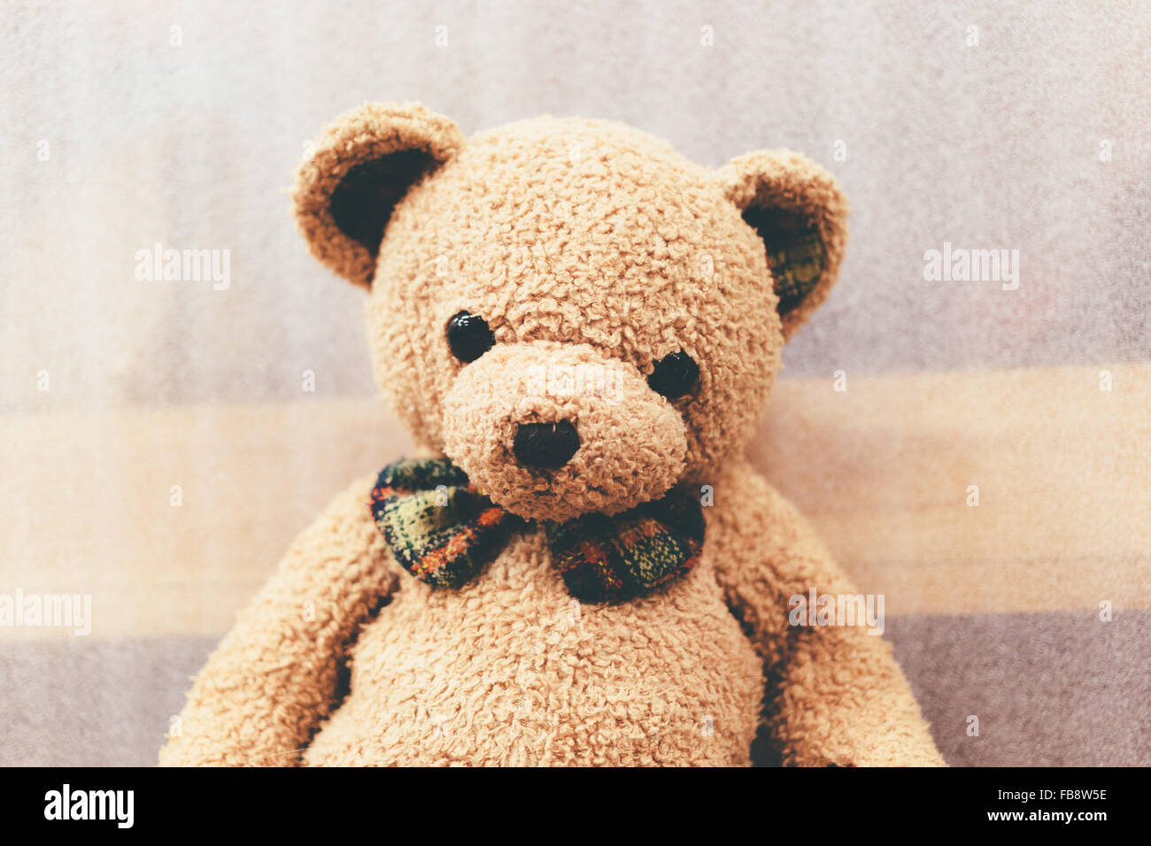 Soft bear brown color with butterfly tie. Stock Photo