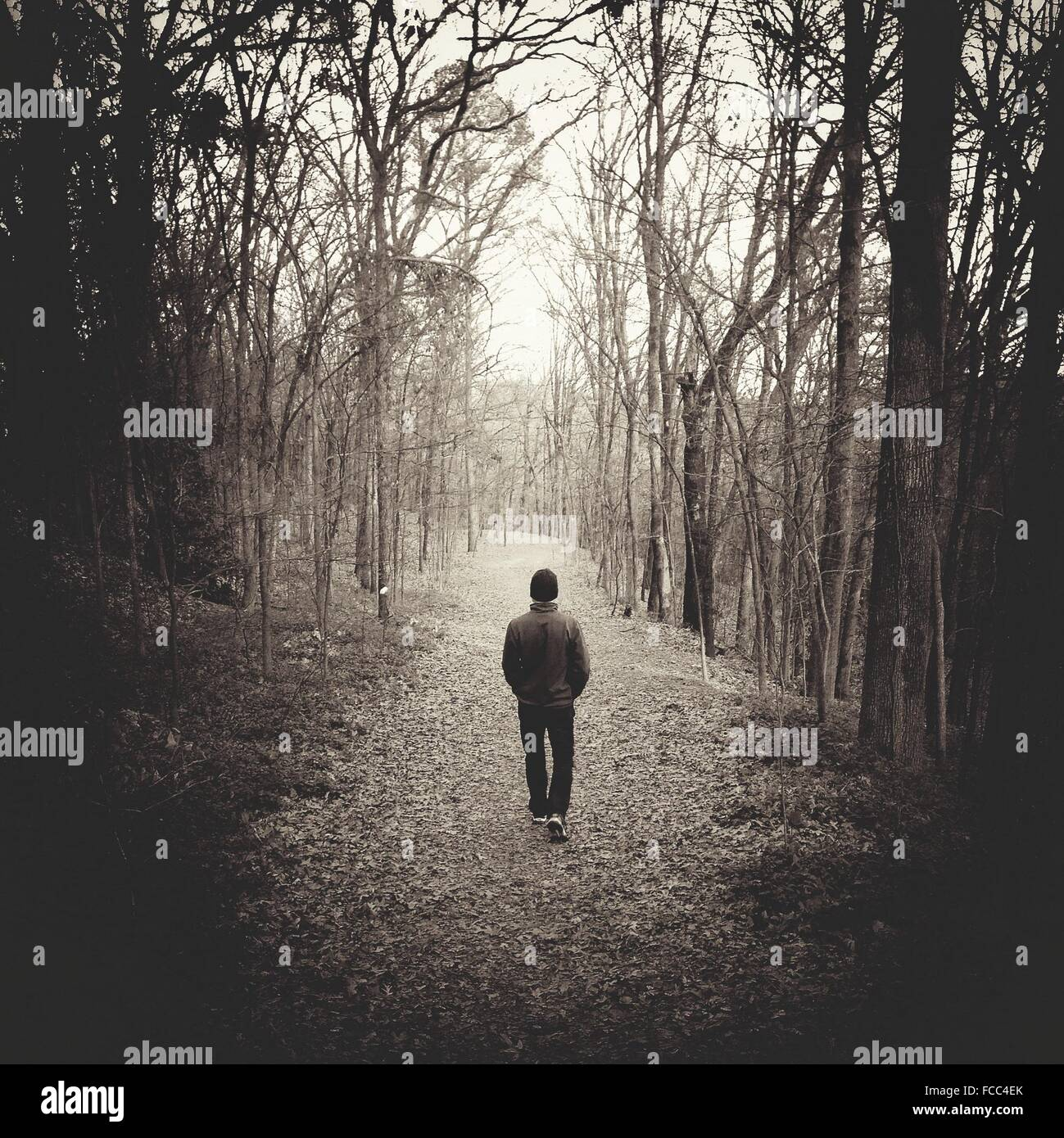 Man Walking In Autumn Forest - Stock Image