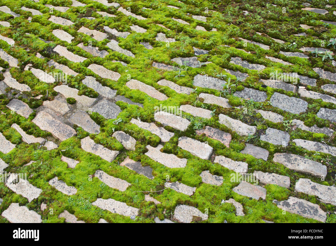 moss-growing-between-cobbles-newcastle-upon-tyne-north-east-england-FCDYNC.jpg