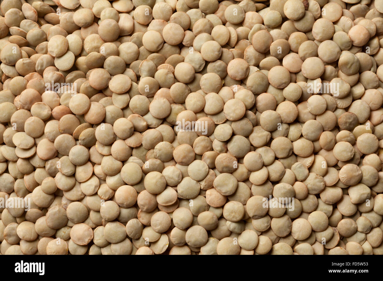 Dried brown lentils full frame - Stock Image