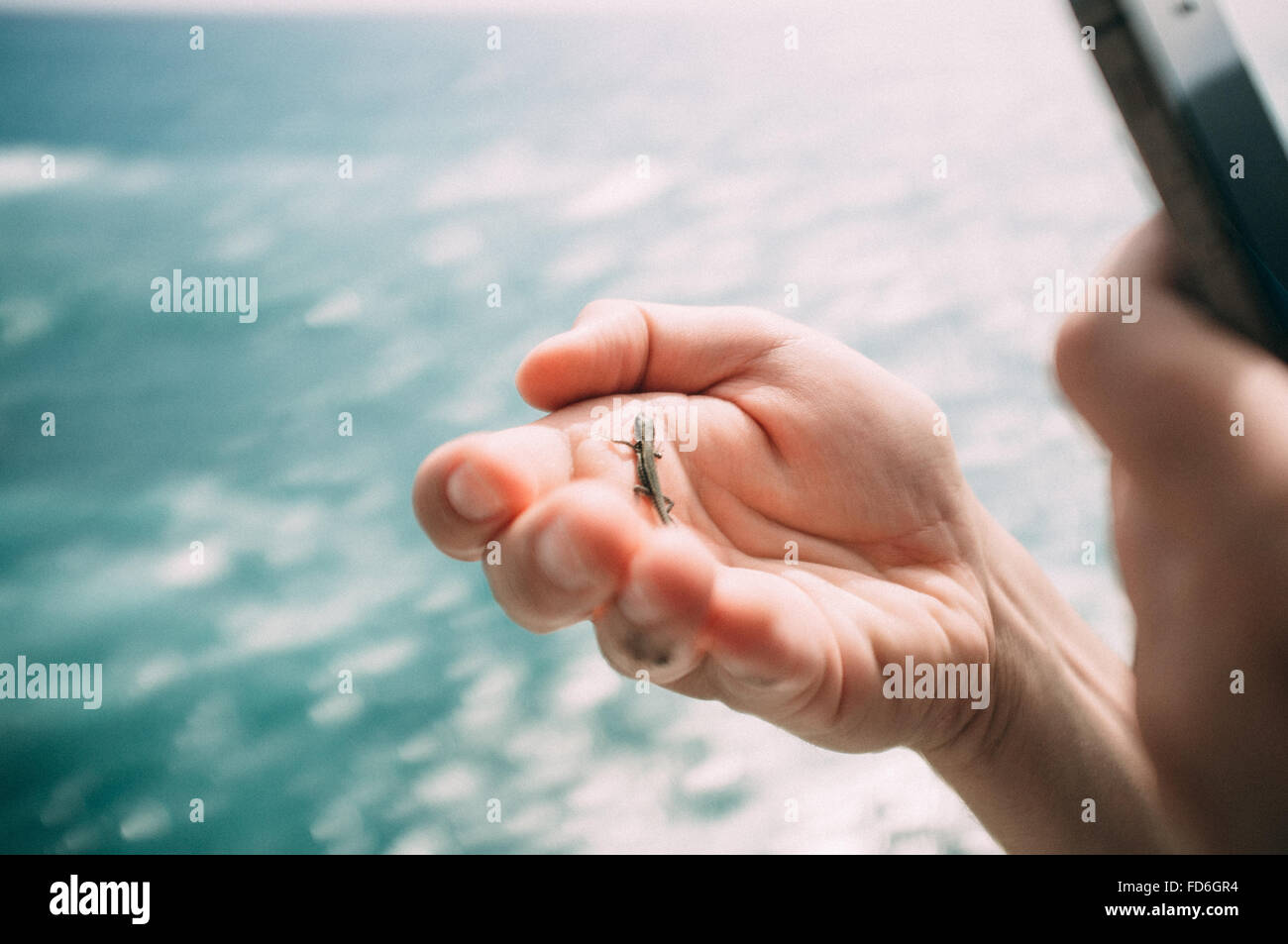 Insect On Human Hand - Stock Image