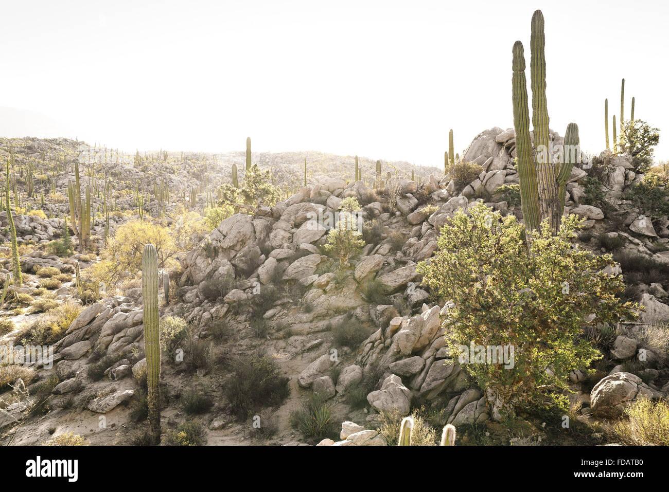 Desert scene in Baja California, Mexico - Stock Image