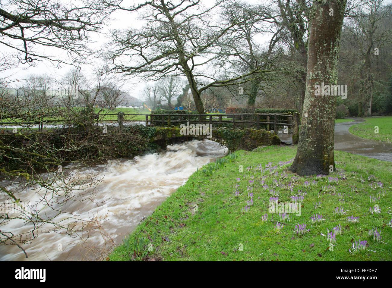Okehampton, Devon, UK. 6th February, 2016. High river levels at Simmons Park in Okehampton during storm. Credit: Stock Photo