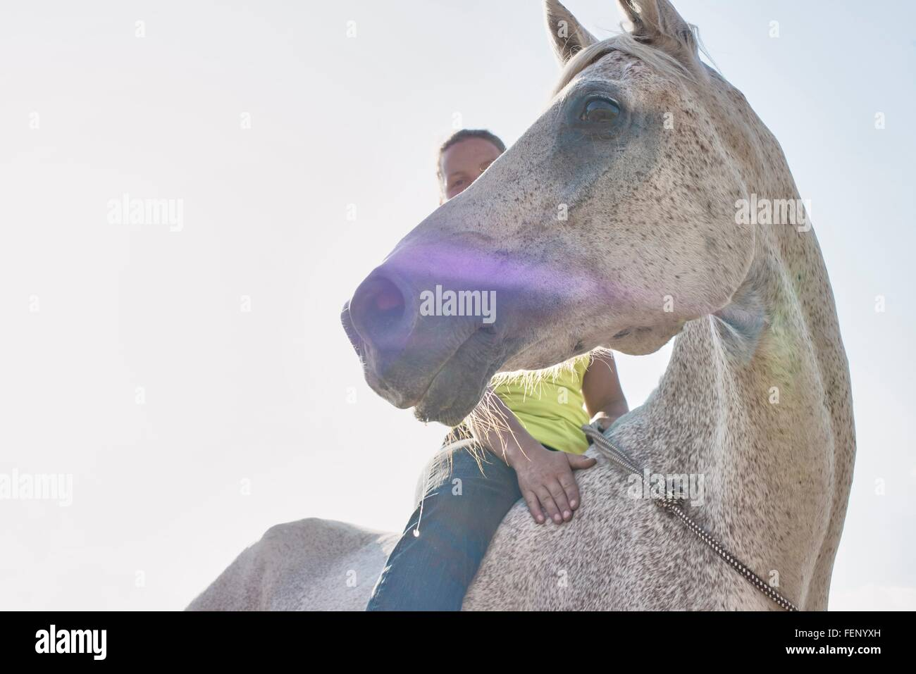 Low angle view of woman riding grey horse bareback - Stock Image
