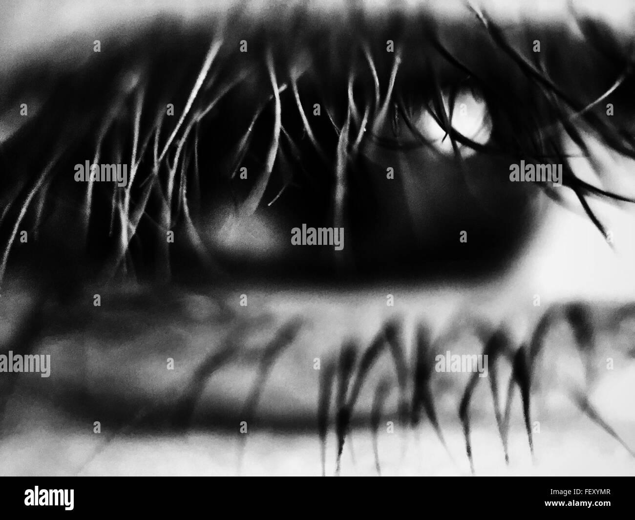 Macro Shot Of Human Eye - Stock Image