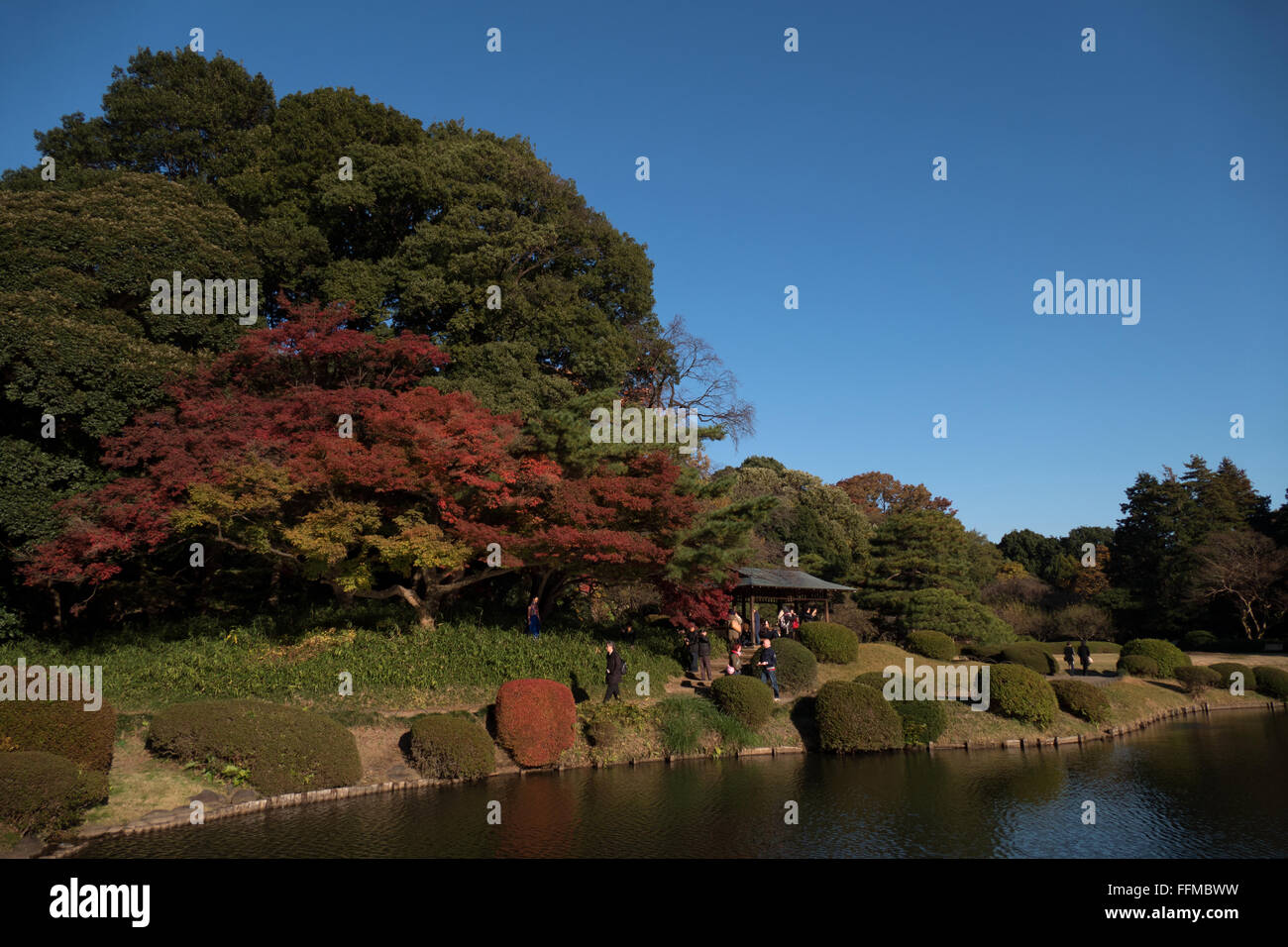 Shinjuku Gyoen National Garden, Tokyo, Japan, Asia. City park, fall ...