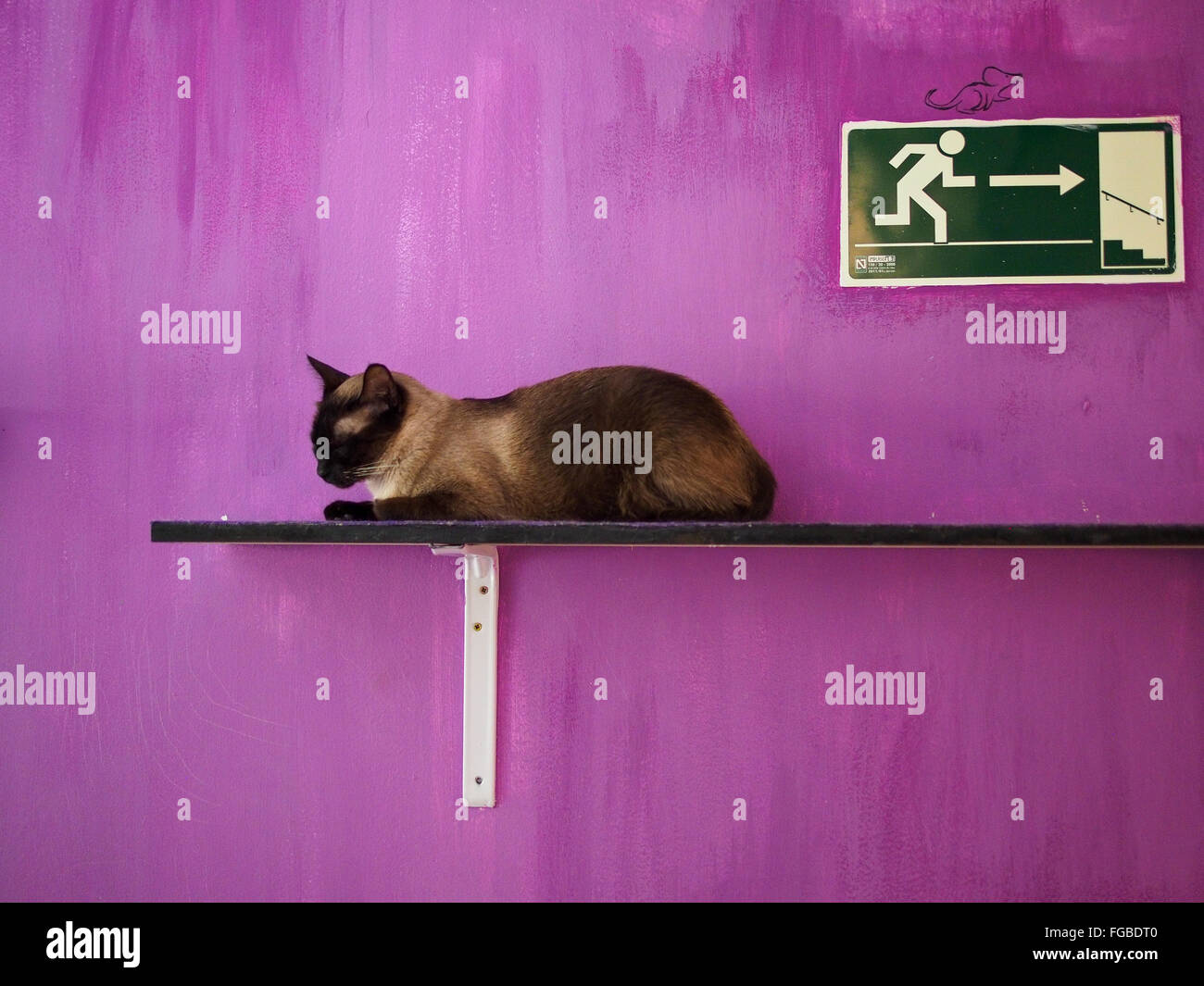 Cat Resting On Plank Against Purple Wall - Stock Image
