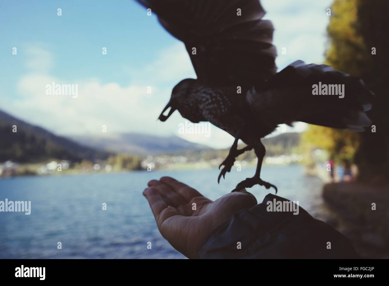Cropped Image Of Bird Taking Off From Palm Against Sky - Stock Image