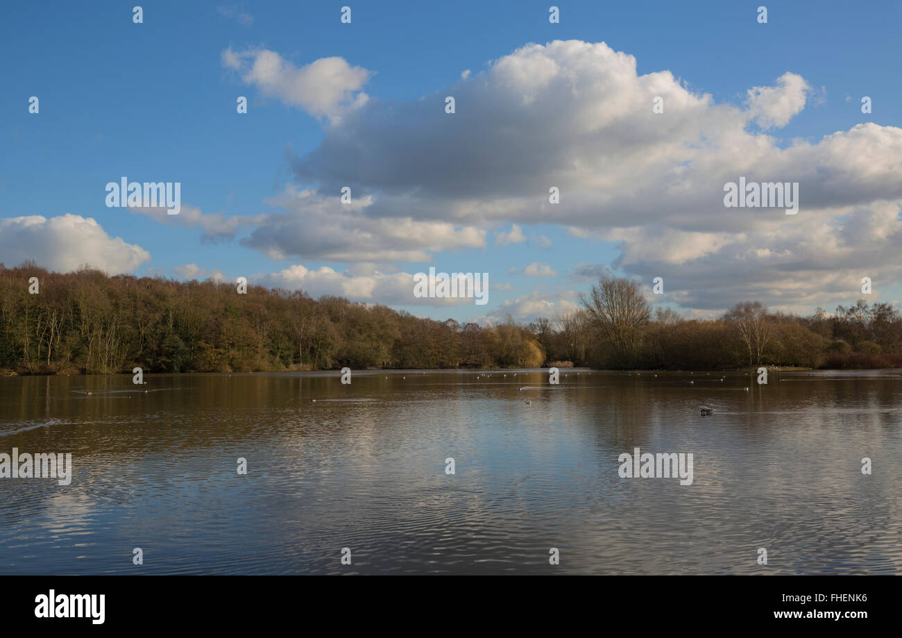 Rufford Lake in the warm afternoon sunshine - Stock Image