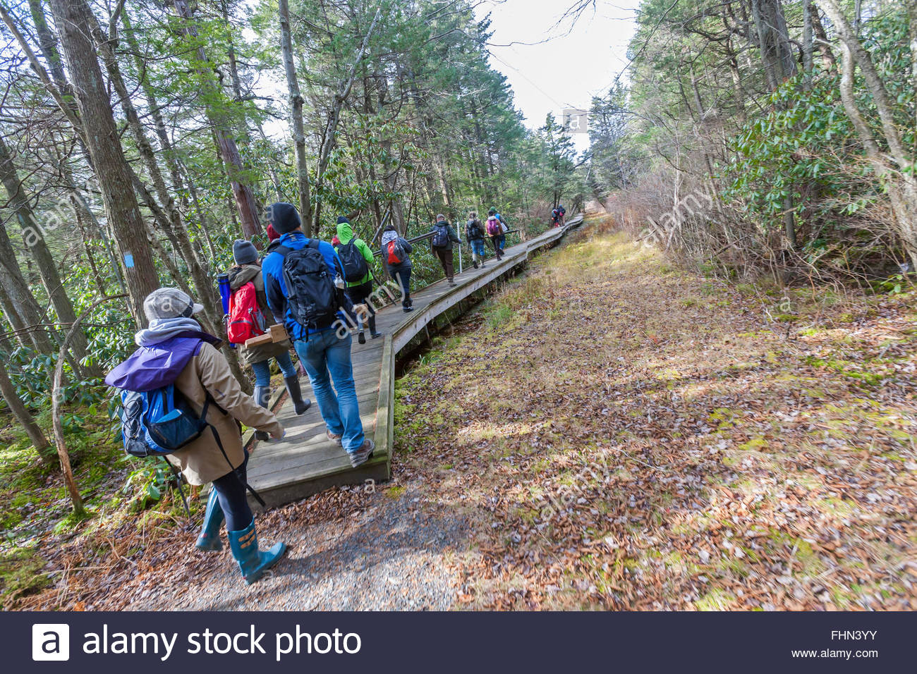 A group of people, young men and women on a hike in the woods. - Stock Image