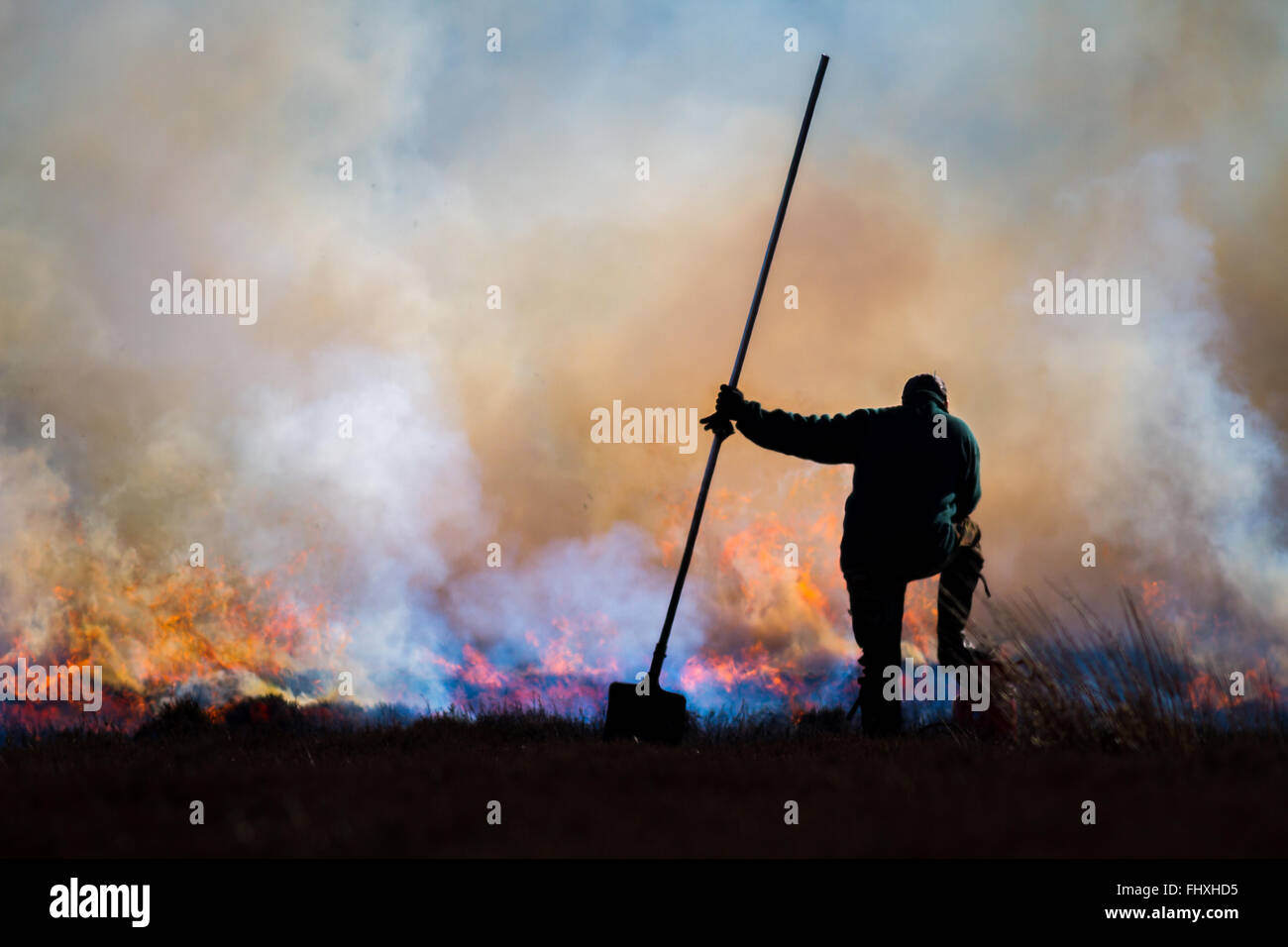 Gamekeeper undertaking controlled burning of the heather moors, Yorkshire Stock Photo