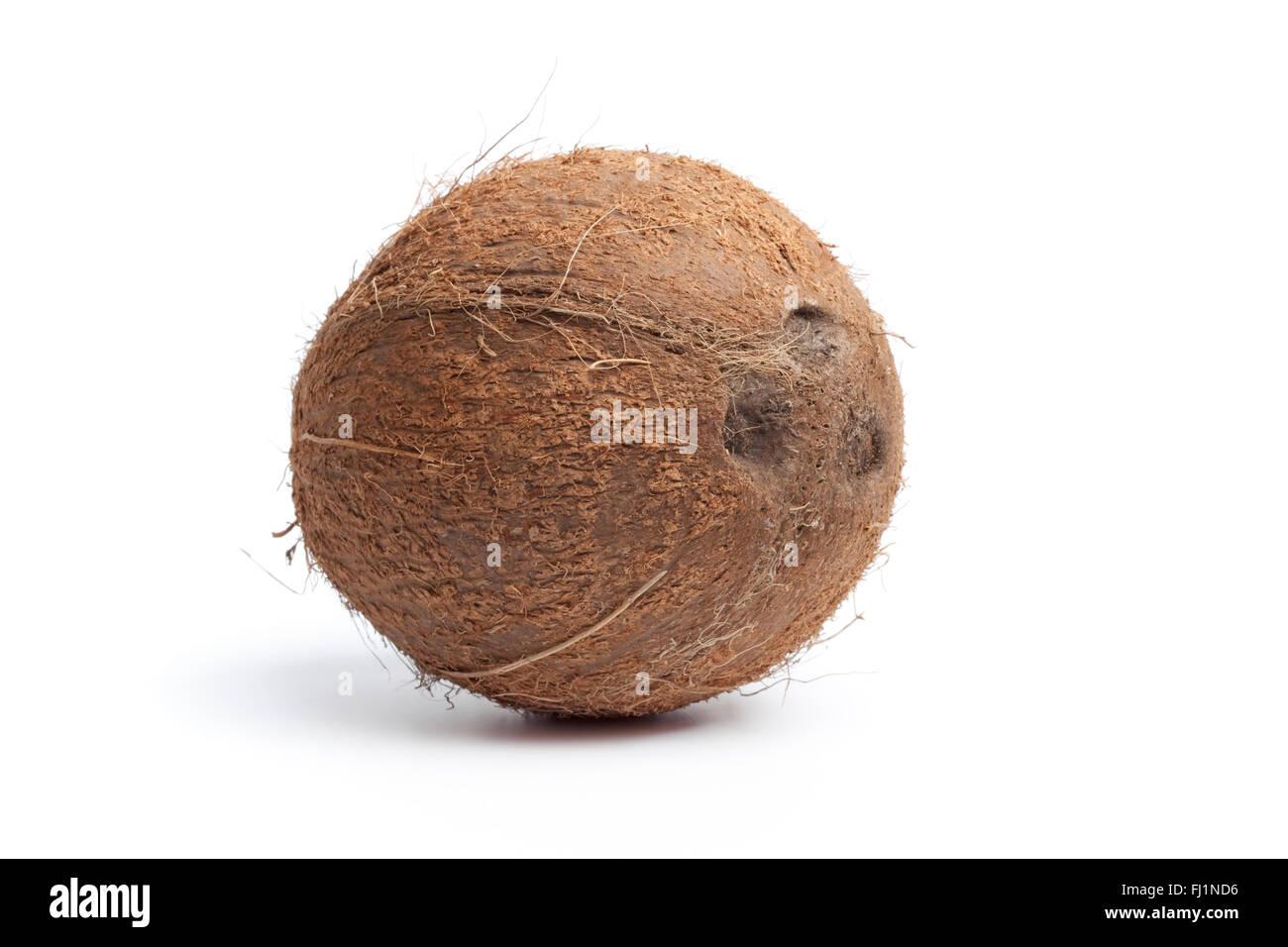 Whole single fresh coconut isolated on white background - Stock Image