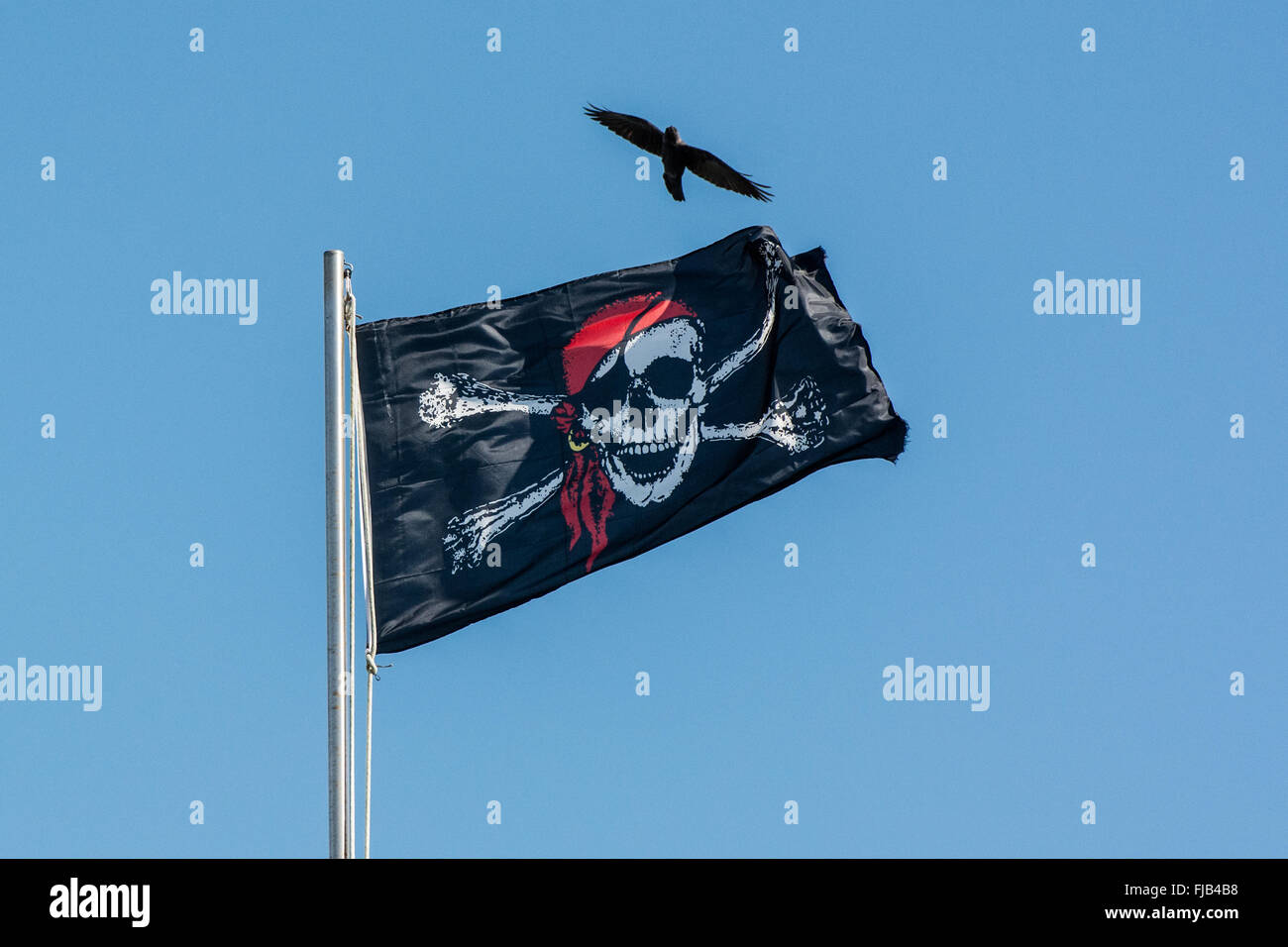 Pirate jolly roger flag flying on flag pole with crow flying - Stock Image