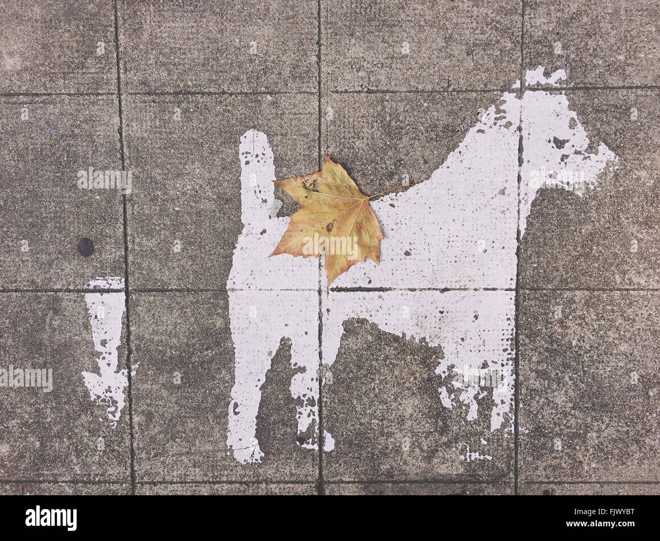 Directly Above View Of Dog Sign By Arrow Symbol On Footpath - Stock Image