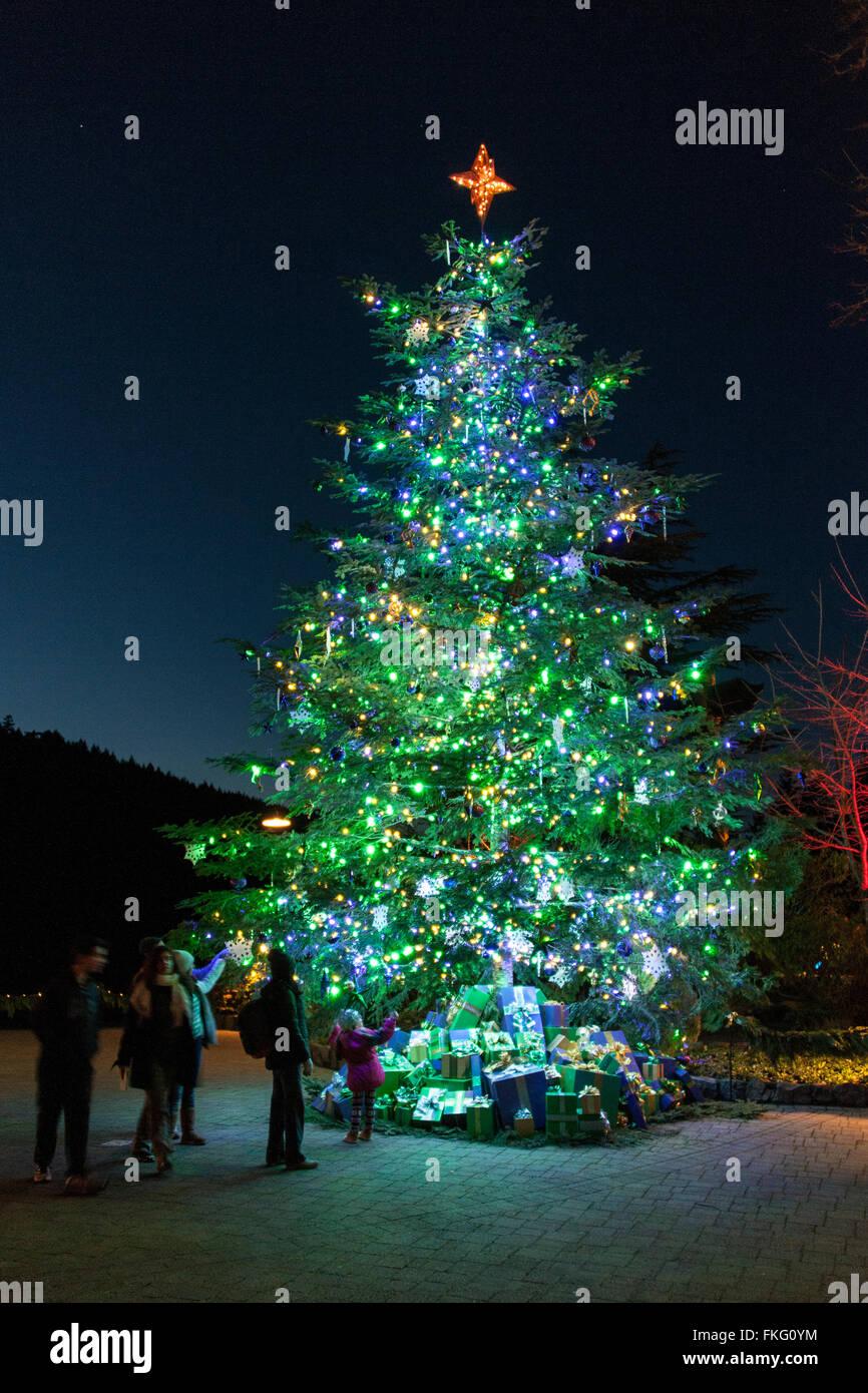 Giant Christmas Tree at Butchart Gardens, Victoria, BC, Canada Stock ...