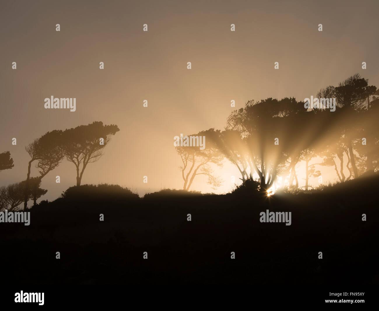 Sunburst  at sunrise through trees at Devil's Punchbowl State Natural Area. Oregon - Stock Image