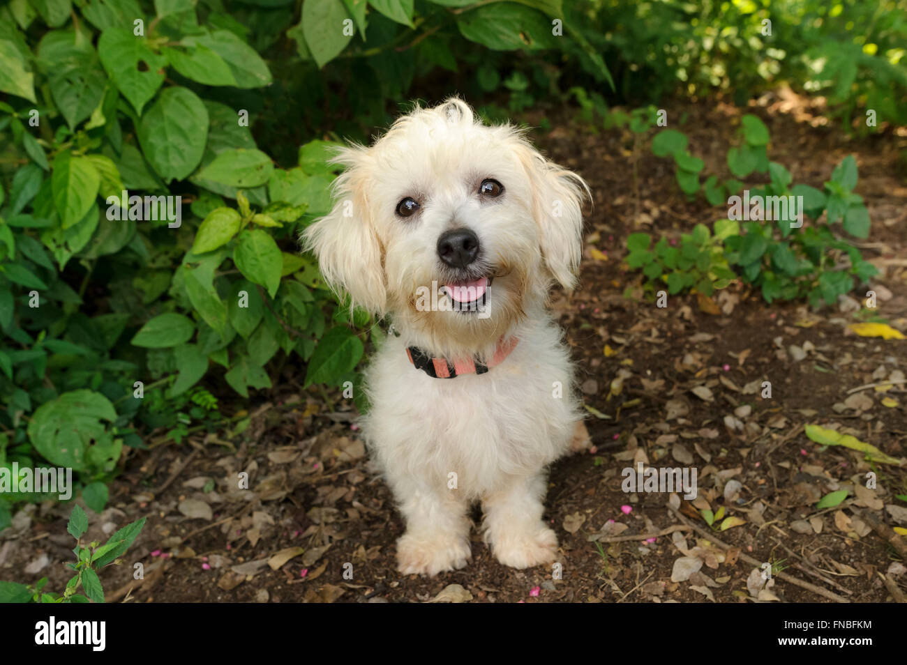 Cool Floppy Ears Brown Adorable Dog - happy-dog-is-a-white-happy-looking-dog-with-cute-floppy-ears-and-his-FNBFKM  Pictures_731143  .jpg