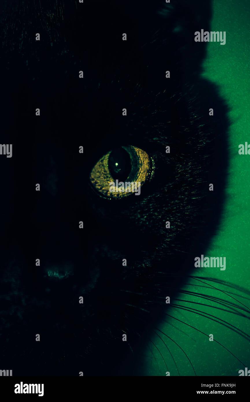 black cat eye close up - Stock Image