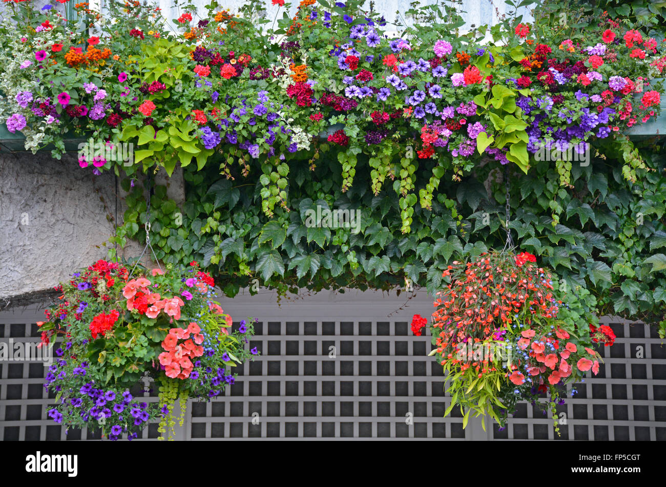 Beautiful Hanging Baskets Filled With A Variety Of Flowers Stock