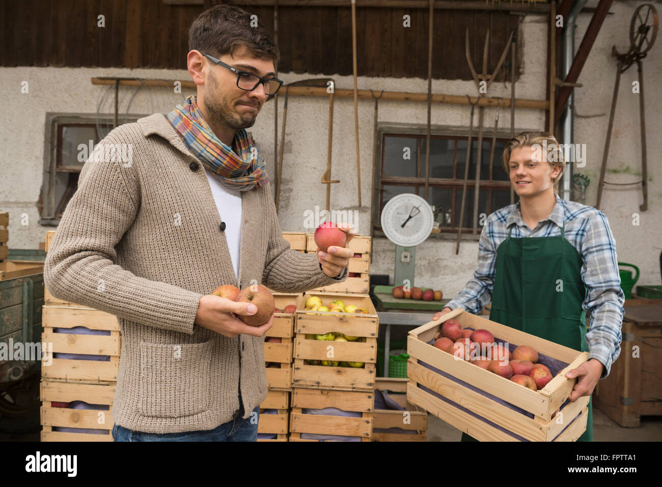 Critical wholesale purchaser buying apples in organic farm, Bavaria, Germany - Stock Image