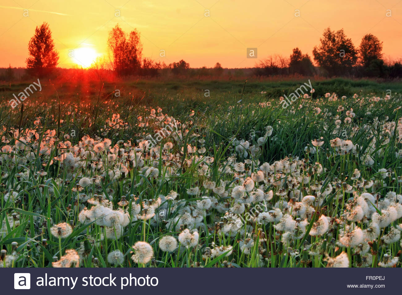Sunrise on the field in summer - Stock Image