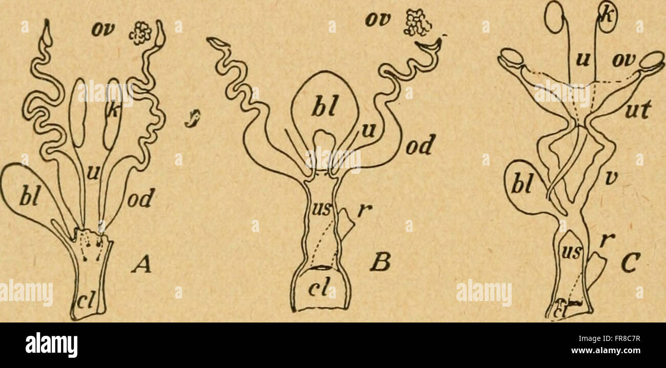 Bensley\'s Practical anatomy of the rabbit - an elementary laboratory ...