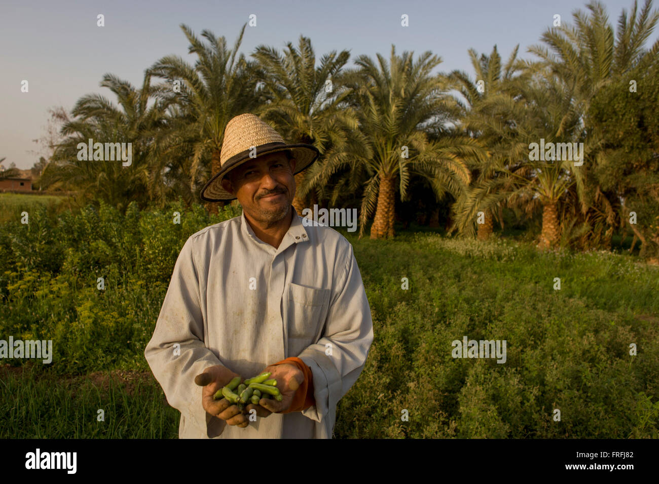 a-farmer-holds-a-crop-of-green-beans-in-