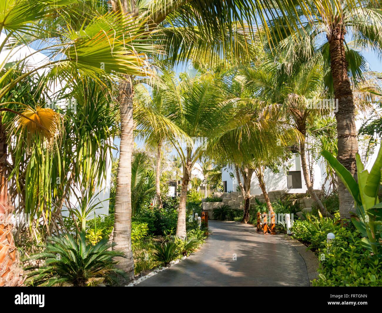 Tropical garden of luxury hotel beach resort in Dubai, United Arab ...