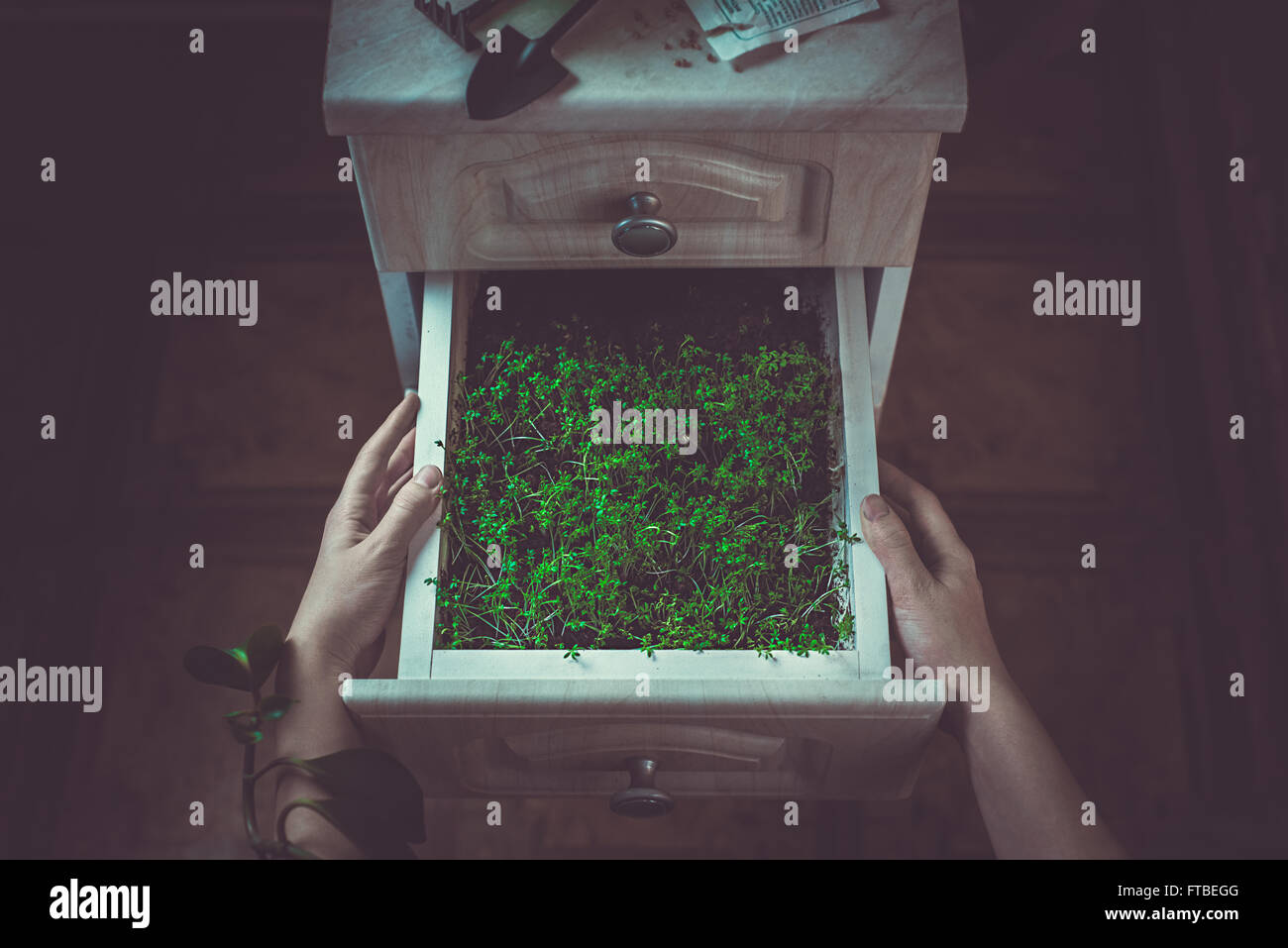 Gardener's drawer - Stock Image