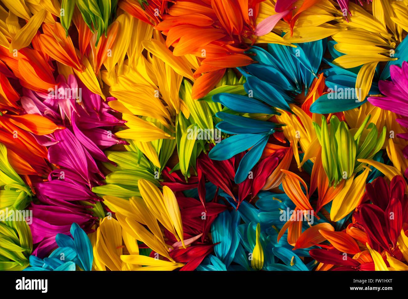 Multicolored daisy petals close-up Stock Photo