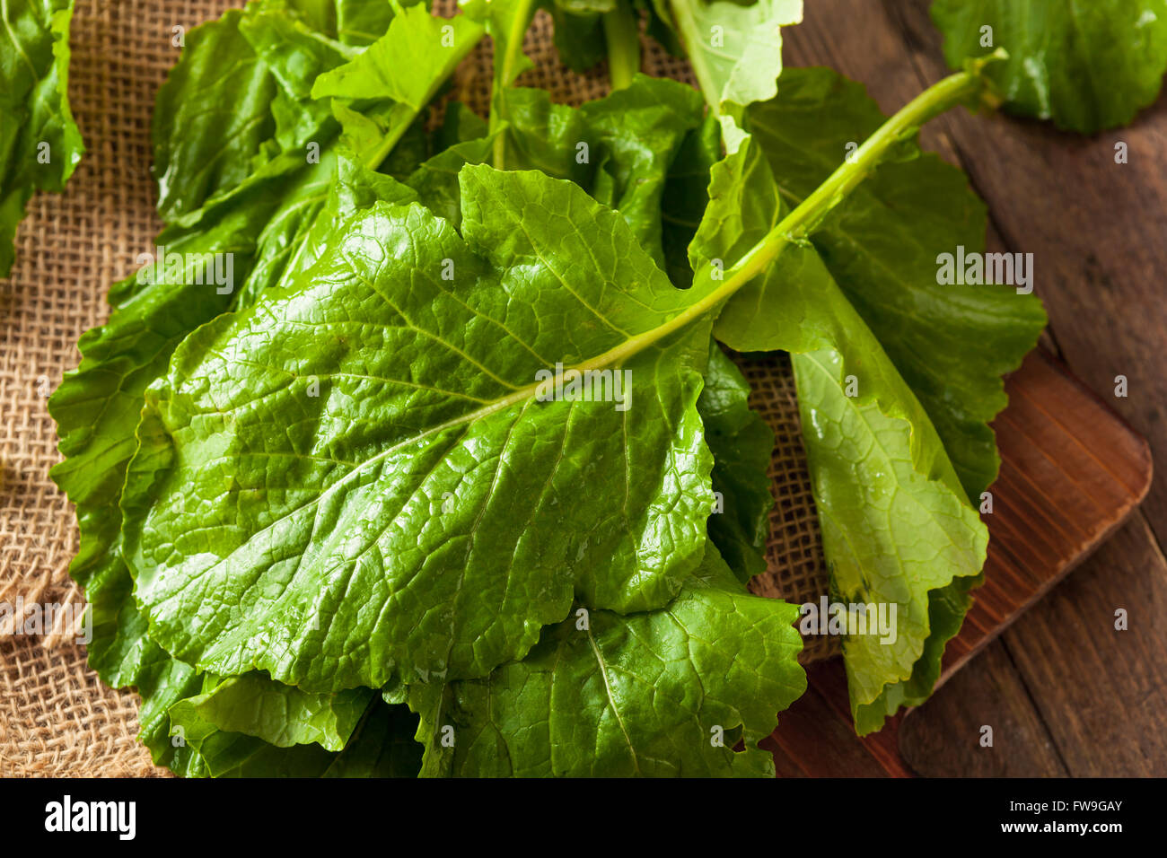 Raw Organic Turnip Greens Ready to Eat - Stock Image
