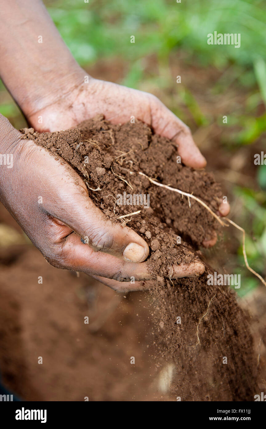 Person holding fertile soil in their hands, Rwanda. - Stock Image