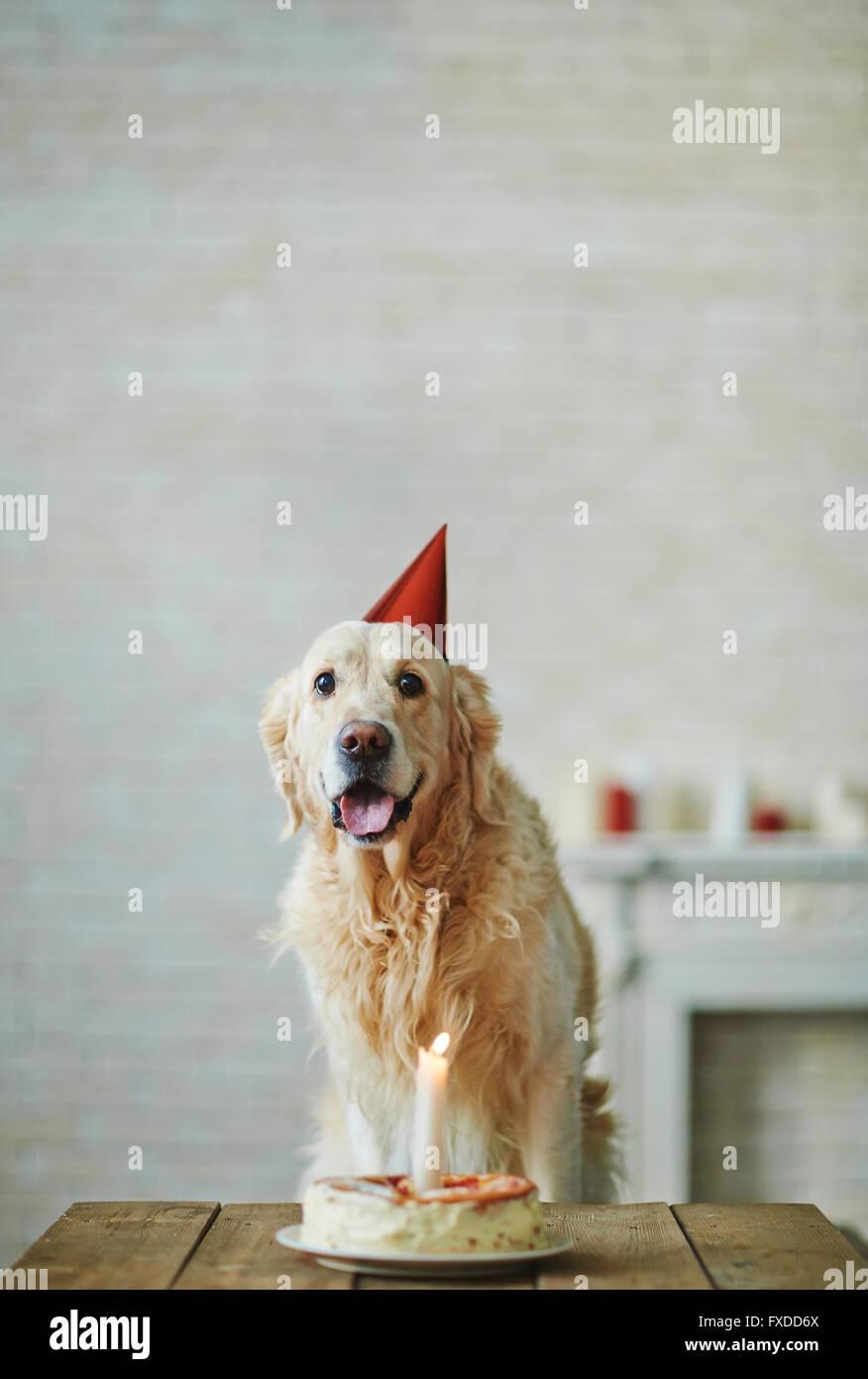 My first birthday - Stock Image