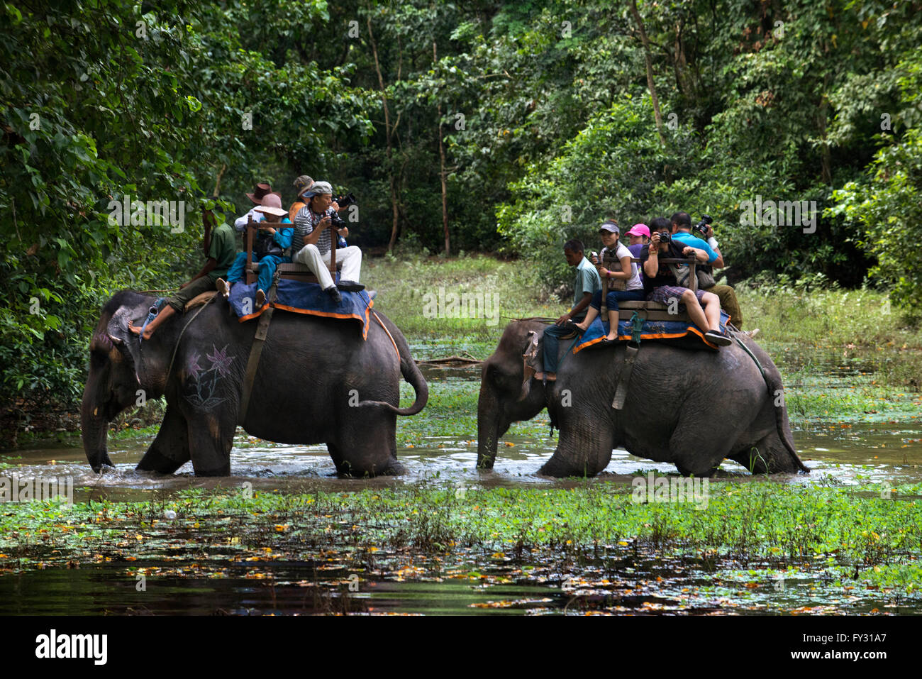 Indian or one-horned rhinoceros and tourists on elephant safari in Chitwan National Park, Nepal Stock Photo