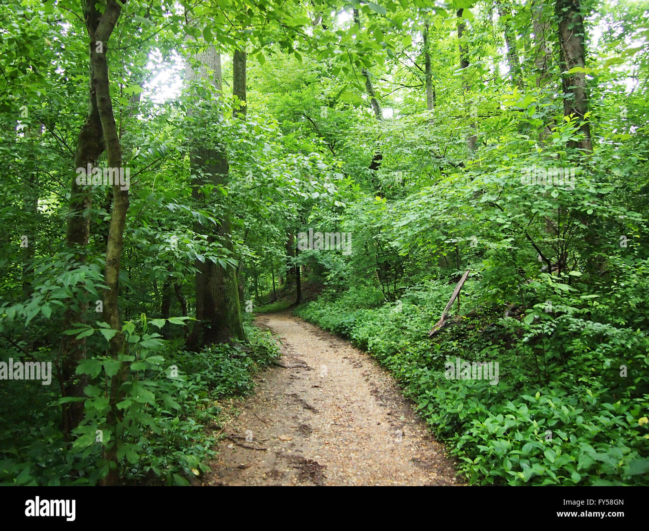 Dirt Path surrounded by trees in Forest in Rock Creek Park, Washington DC. Stock Photo