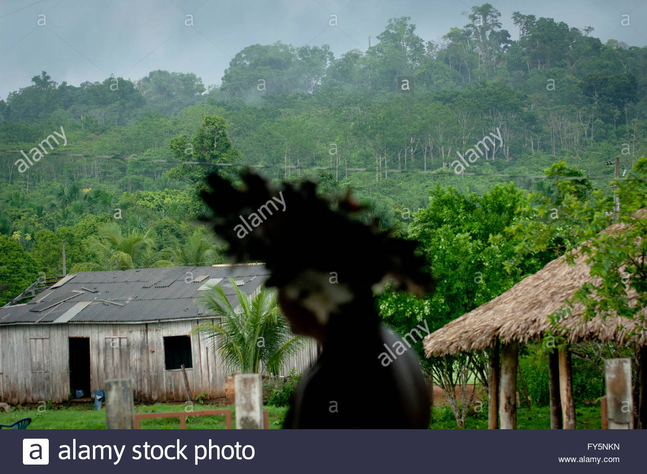 Lapetanha, Rondonia, Brazil at the '7th September Indian Reserve',Rondonia, Brazil. - Stock Image
