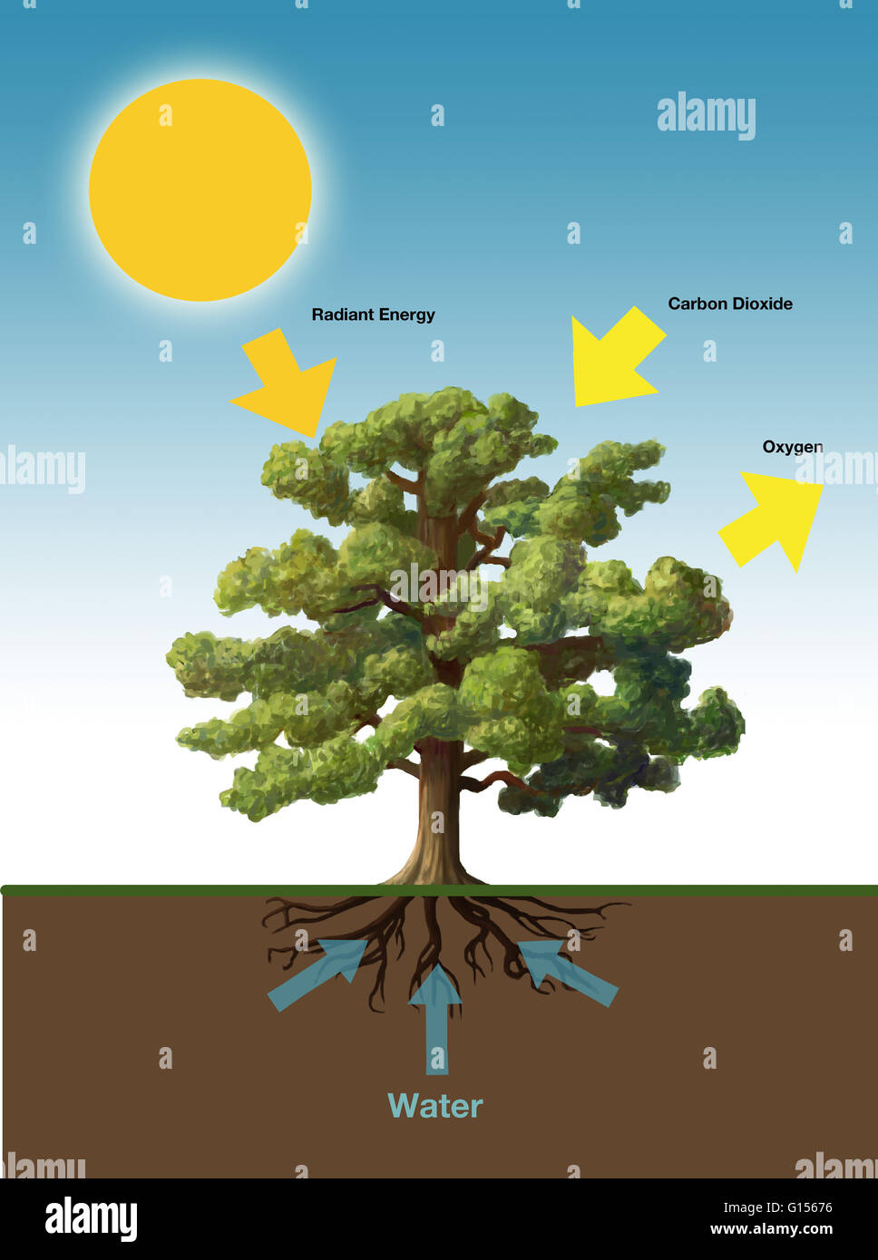 Diagram showing the process of photosynthesis the process by which diagram showing the process of photosynthesis the process by which plants make energy ccuart Image collections