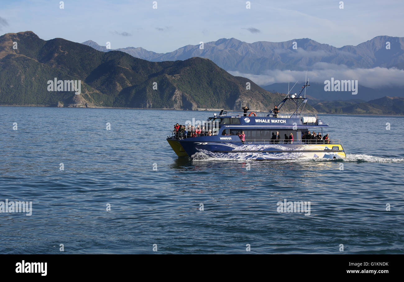 whale watching boat at kaikoura on the south island of new zealand Stock Photo