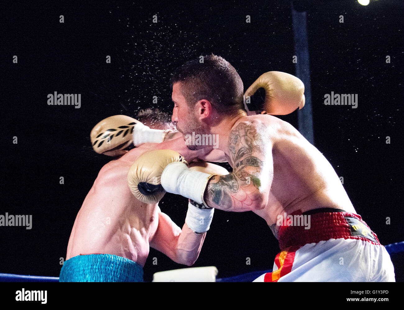 Gijon, Spain. 21st May, 2016. Marc Vidal hits Juancho Gonzalez during the boxing match of Spanish national featherweight - Stock Image