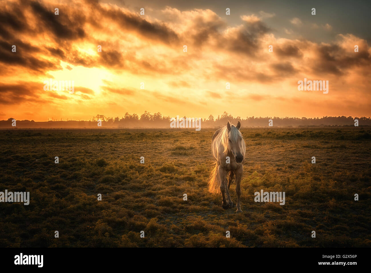 Horse in a Pasture with Orange Sunset - Stock Image