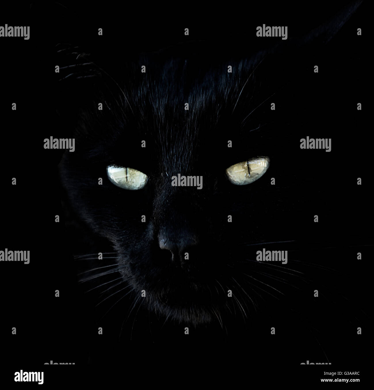 close-up-portrait-of-black-cat-with-glow