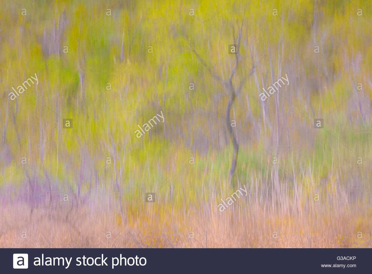 neo-impressionist-abstract-colours-and-p